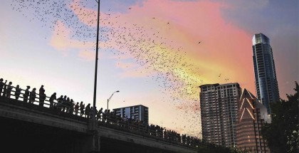 Urban Bat Colony of Austin - Photo Credit Austin Convention & VisitorsBureau